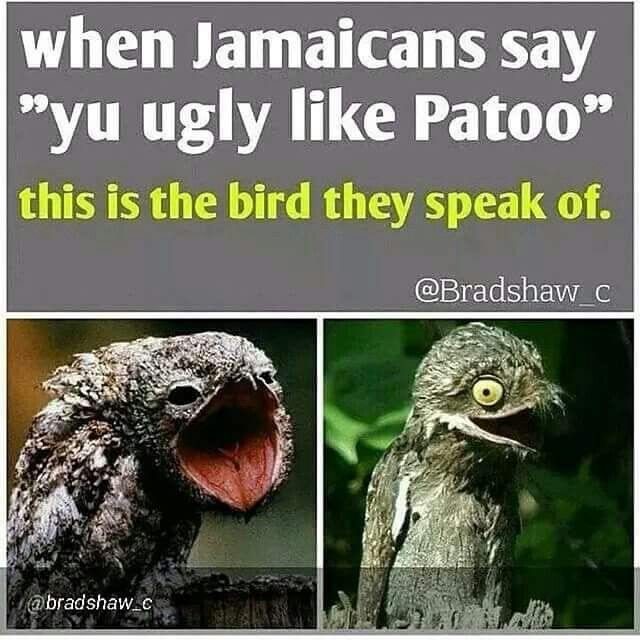 Funny Jamaican Meme : Best images about jamaican fever on pinterest jokes
