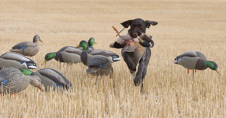 The Top 20 Best Hunting Dog Names - Wide Open Spaces