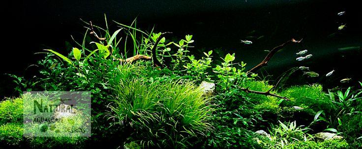 ... ebay.com/Natural-Aquascape-Designs Aquascaping Pinterest Plants