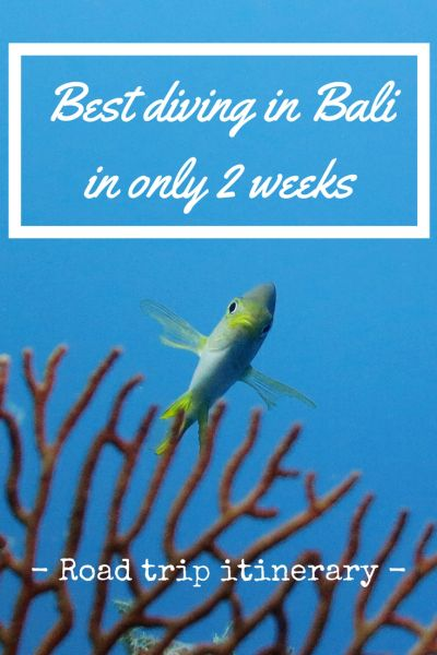 Bali is one of the few destinations where it is easy to pack a 2 week holiday with at least 5 exciting scuba diving sites while visiting at least 8 breath-taking places. With so much diversity, you…