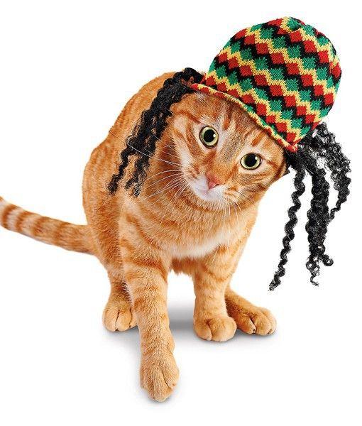 rasta-catRasta Cat