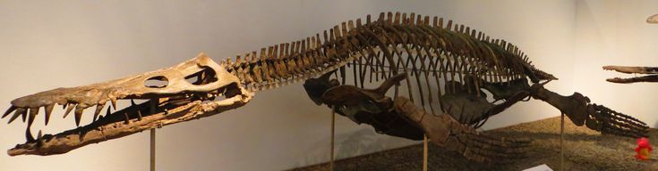 10 Facts About Liopleurodon: Liopleurodon Was the Apex Predator of Late Jurassic Europe