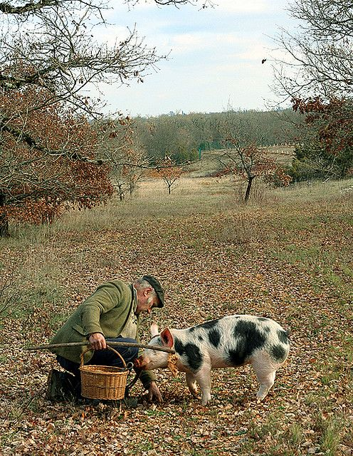 A Truffle Hunter and his Truffle Pig in France.  One if my dreams.. To go along on a truffle hunt