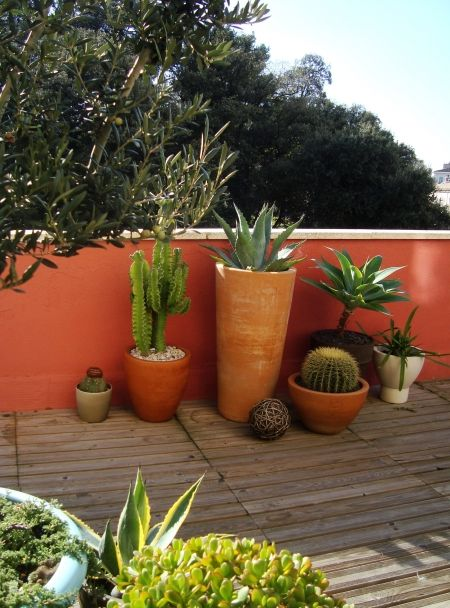 Outdoor terrace with terracotta pots and succulents, cactus