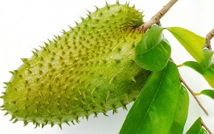 This One Fruit Kills Malignant Cells Of 12 Different Types Of Cancer – What would you do if you found out that the extract from a single fruit could keep the rogue cells of 12 different types of cancer in check? Mainstream media reports that the fruit known as graviola, also known as soursop fruit, guanabana, or guyabano, is not a noteworthy cancer-fighter, but there... #cancer #fruit #graviola