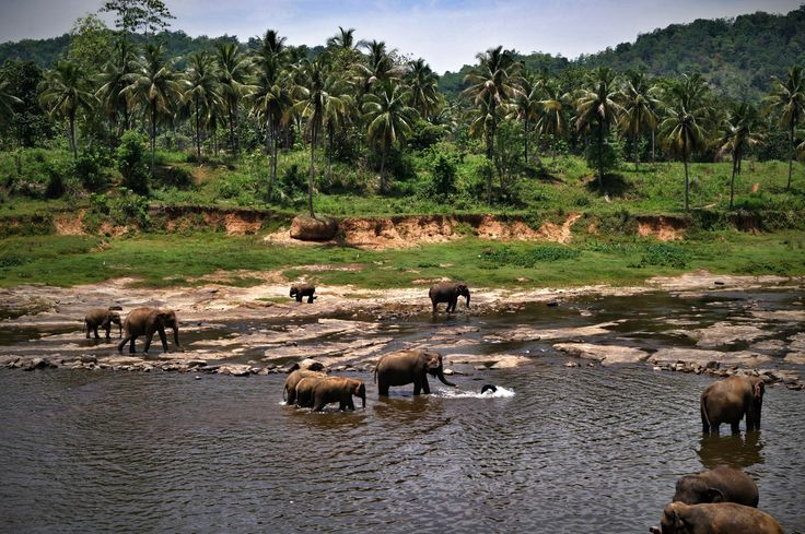 Sierociniec dla słoni Pinnawala #Pinnawala #SriLanka Karolina Wróż pracownik działu Call Center