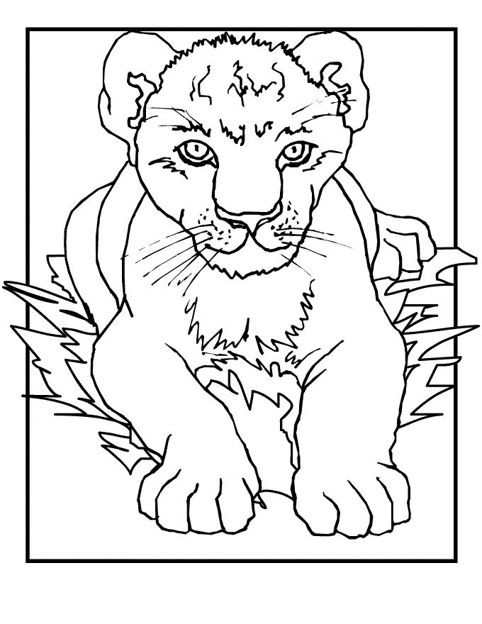 printable lion coloring pages  kids lion