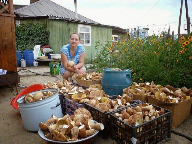 """""""Моя любимая дача!"""": Выращиваем грибы на даче"""