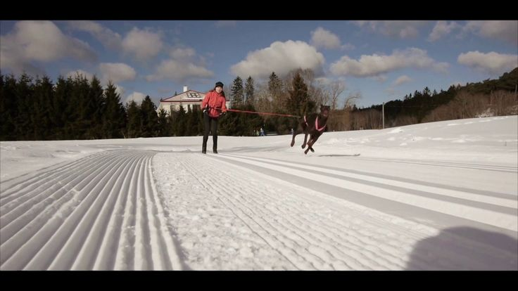 We were waiting for almost 2 years when Roxy become grown and trained enough to start towing. Marianna never skied before, so it was pretty challenging beginning…