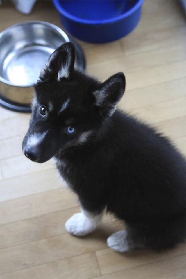German Shepard, husky mix. That's my Puppy!!!