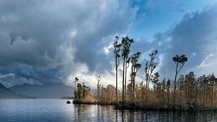 Kahikatea trees on the edge of Lake Brunner, Westland, New Zealand.    John Doogan www.johndoogan.co.nz/