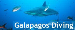 Galapagos island scuba trip. See all available tours We will take you to enjoy an underwater adventure in the Galapagos Islands: Santa Cruz and Isabela Islands in our original Red Mangrove style. With only a short navigation between islands, you will experience the best of both – without missing the land excursions. Learn about Galapagos diving: PADI certification,professional certification, ... [Read more]