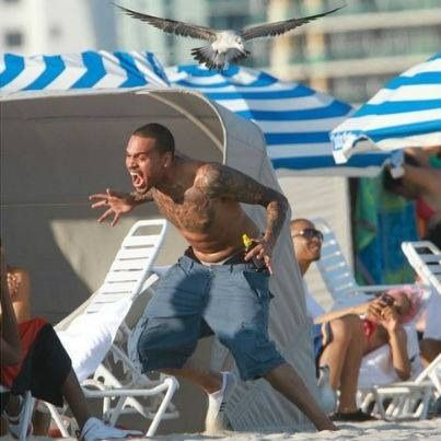 If you're having a bad day, enjoy this photo of Chris Brown being attacked by a seagull .@Brittany Anthony