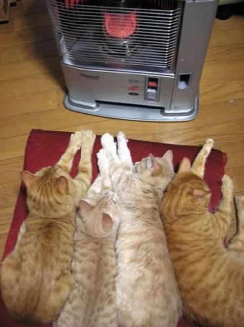 日本だなぁ・・・keeping warm in Japan
