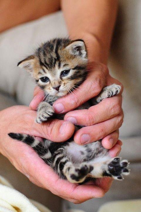 Cute cats Photo – Cats