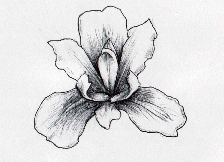 Iris Flowers Drawings - Flowers : Tree of Life #v98NWMJg0n