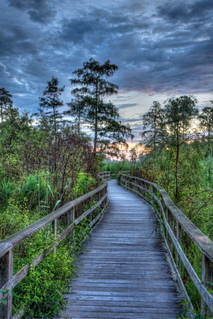 Boardwalk Sunrise, Corkscrew Swamp Sanctuary, Naples, Florida