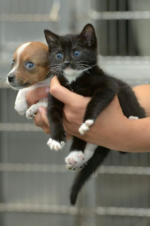 Being all puppy and kitten eyed together. | A Rejected Puppy And An Abandoned Kitten Adopt Each Other