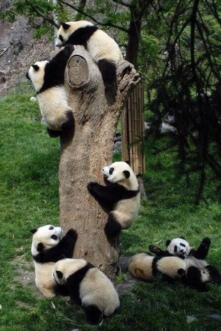 I dream of seeing something like this in real life.  Check out all of the cuteness!