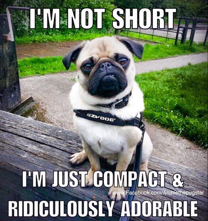 Pug humor.