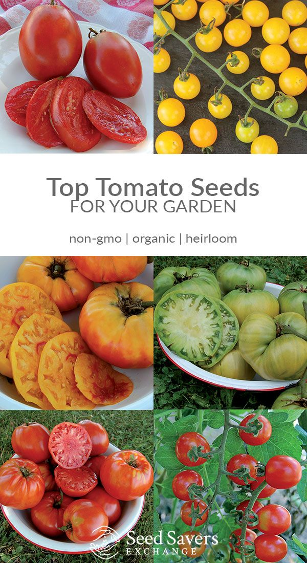 Shop Seeds for 80+ Heirloom Tomato Varieties