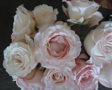 407 best Flower Types images on Pinterest Flower types Flower