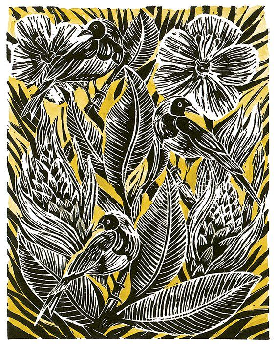 Searching for amanda colville botanical birds