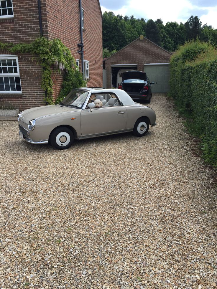Nissan figaro with puppies in car