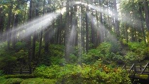 Places to Go- Olympic National Park