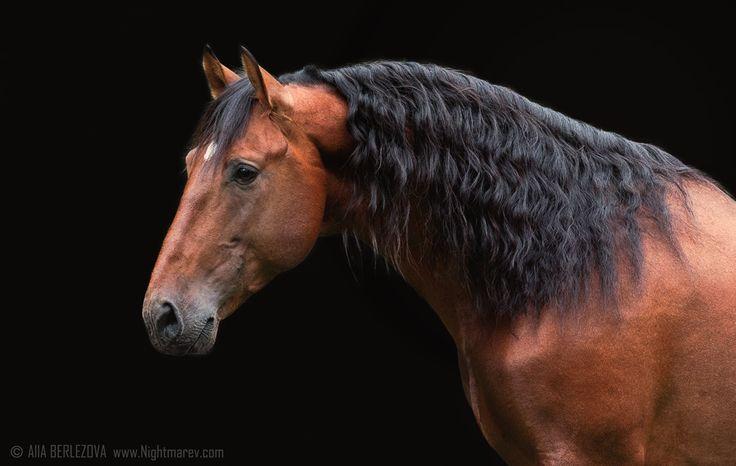 """лошаÐÐ, -""""'оÐ3Ñ Ð¾Ñ€Ð°Ñ""""ÐÐ, лошади, фотография, Алла, berlezova, кошмар-в, природа, кошки, собаки, дикая природа, Америка, аппалуза, ковбой, пастушка, верховая езда, коневодство, Европа, Западная"""