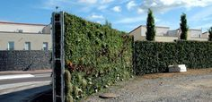 Grüne Lärmschutzwand 'Helix® Compacta'