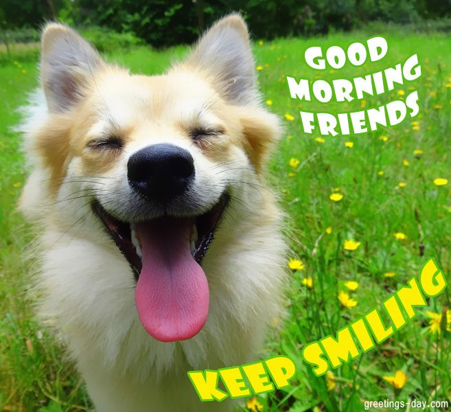 Good Day Sunshine Nc : Best images about good morning sunshine on pinterest