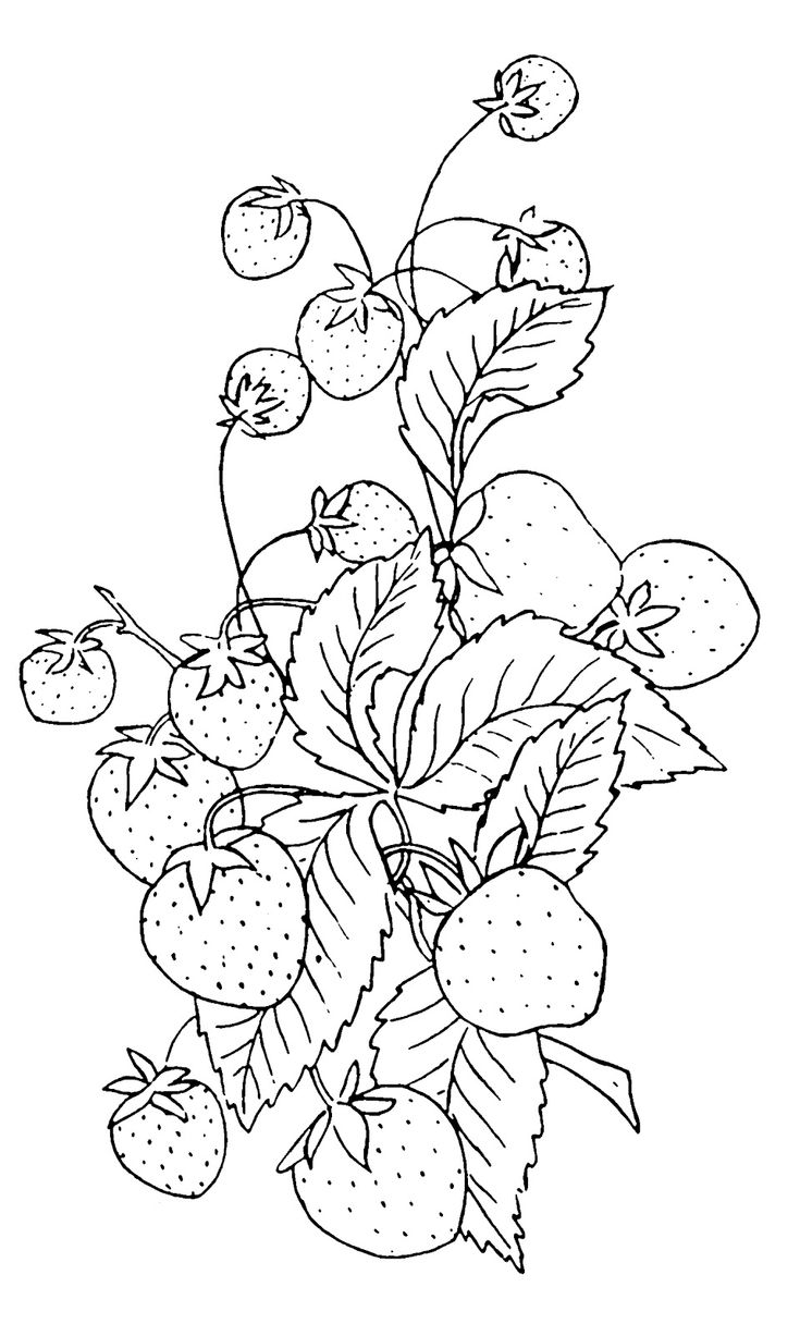 Free coloring pages kitchen utensils - Vintage Clip Art Strawberry Embroidery Pattern