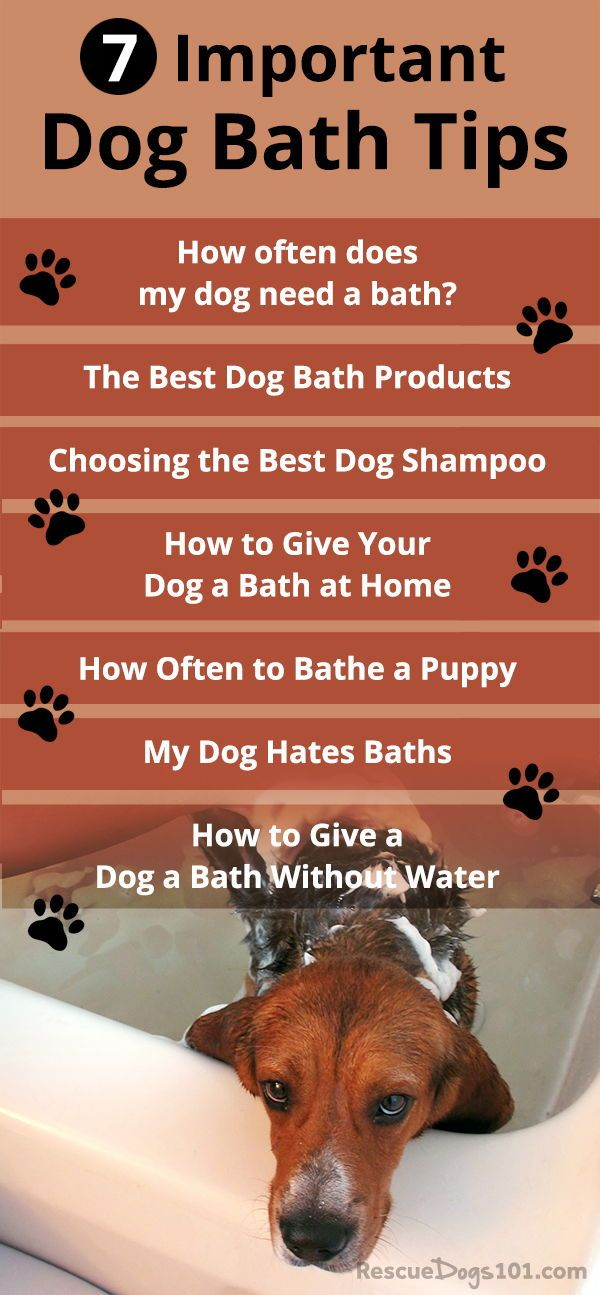 7 Important Dog Bathing Tips Best Dog Shampoo Dog Care Tips