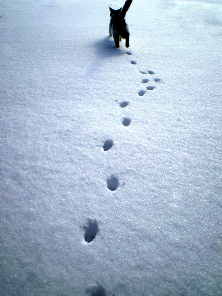 Do not go where the path may lead, go instead where there is no path and leave a trail. ― Ralph Waldo Emerson