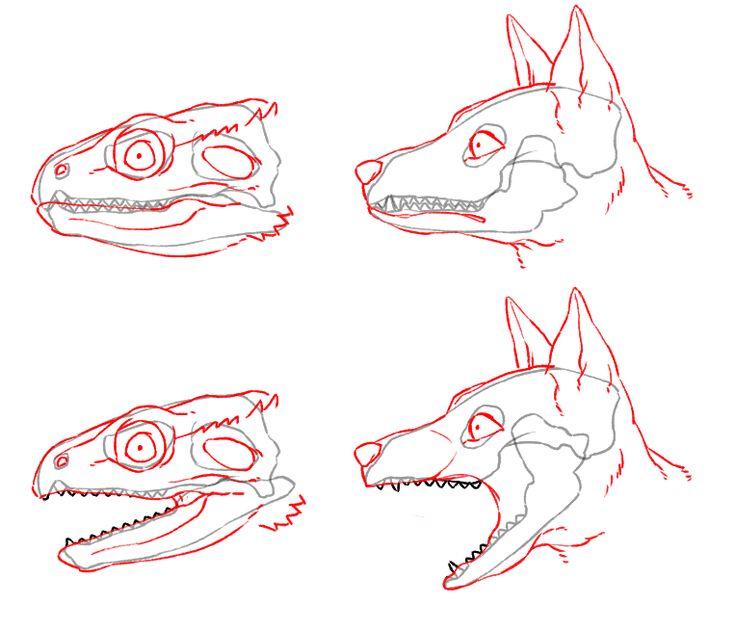 頭蓋骨 ドラゴン 描き方 イラスト  Drawing Dragon Illustration Tutorial