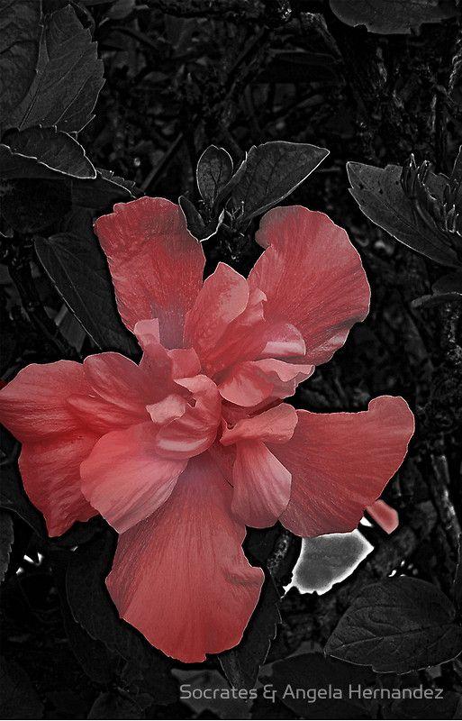 Red Flower  by Socrates & Angela Hernandez