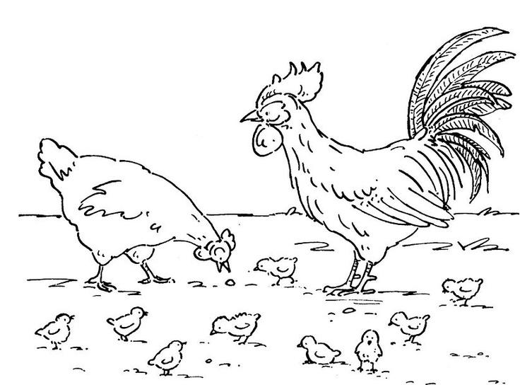 Résultats Google Recherche dimages correspondant à http://www.greluche.info/coloriage/coq/poule-coq-et-poussins.gif