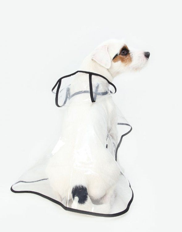 Most Comfortable Dog Harness X X Top 2019