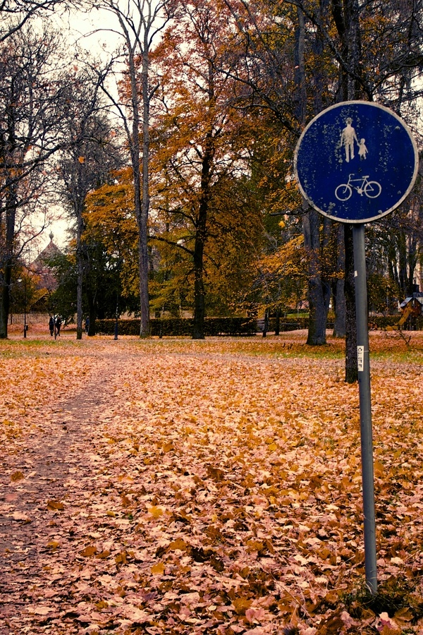 Autumn Bike Path by James Losey, via 500px - (Attribution-NonCommercial-ShareAlike 3.0 http://creativecommons.org/licenses/by-nc-sa/3.0/)