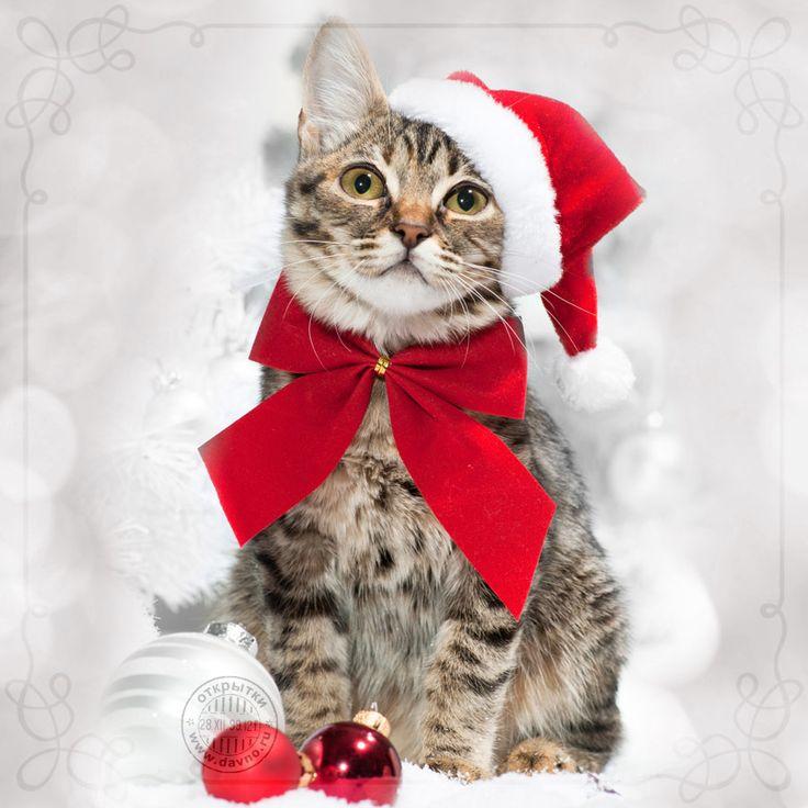 Прикольный кот в костюме Деда Мороза
