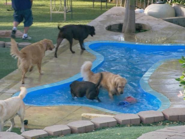 In ground bone shaped pool; I wouldn't be able to keep Sam out of this....if someone was there to throw the ball she would be in heaven.