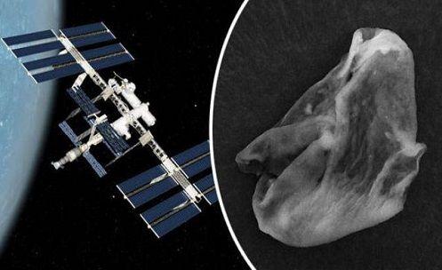 Prova de 'ALIEN VIVO' Revelado com Amostras da Superfície Da Estação Espacial Internacional
