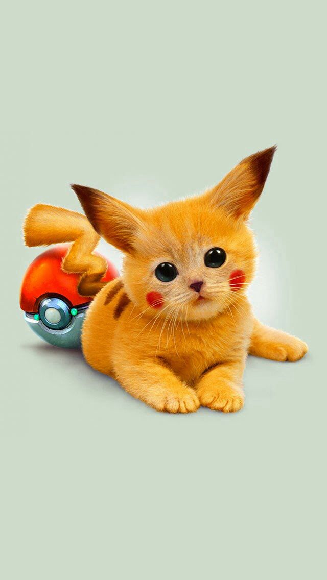 pika kitty pikachu pinterest pikachu pikachu cat and pokémon