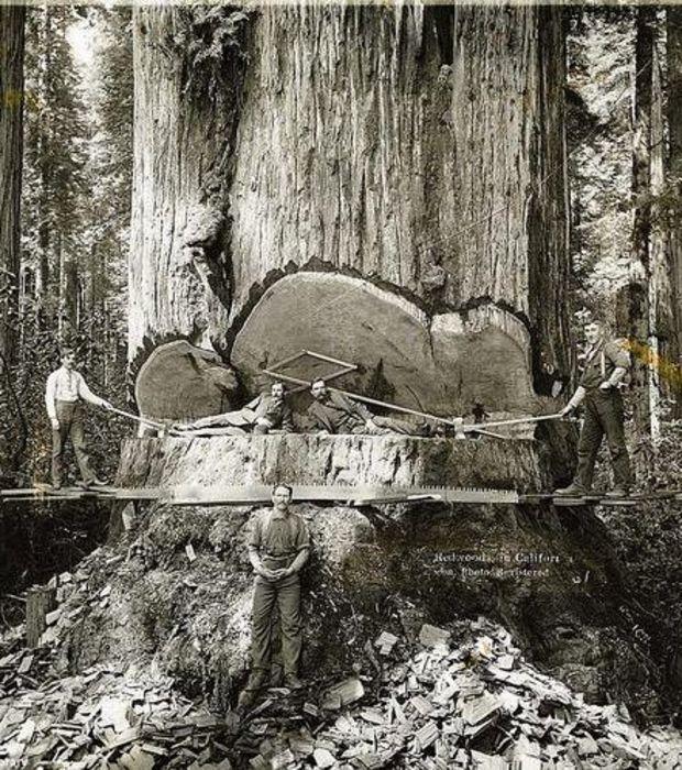 Photo : Ces bûcherons californiens travaillent dans le Parc National de Redwood