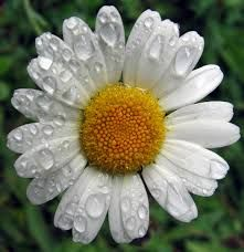 Chamomile-Soothing, Calming, Child safe and much better than Melatonin which is not natural has some would believe