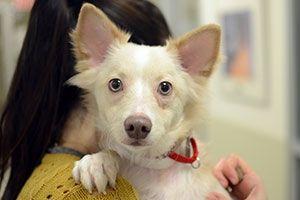 Compulsive behavior in dogs/licking problem with golden retrievers