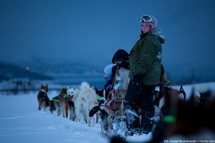 Psie zaprzęgi w okolicach Tromsø, Norwegia. Noc polarna i pustkowie północnej Norwegii tworzą niepowtarzalną atmosferę. #Norwegia #Tromsø #fiordy #emocjewcenie