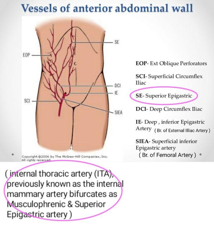 128 best anatomy images on Pinterest | Anatomy, Anatomy reference ...