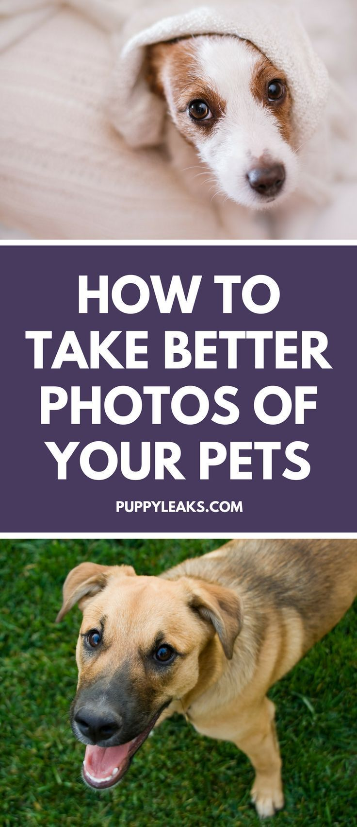 How To Take Better Photos Of Your Pets Do You Struggle When It Comes To Taking Good Pictures Of Your Pets From Choosing Dog Care Dog Photography Cool Photos